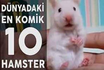 Ölü Takliti Yapan İnternetteki En Komik 10 Hamster