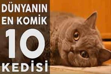 İzlenme Rekoru Kıran Kedilerin Komik Halleri
